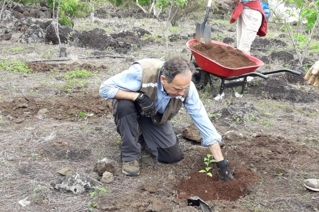 Male volunteer assists with reforestation work